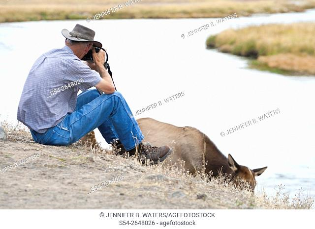 A man photographing an elk up close in Yellowstone National Park, Wyoming, USA