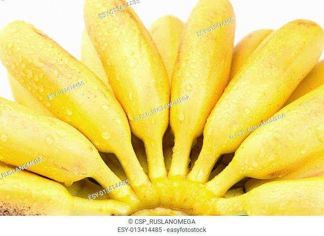 small tropical banana in a bunch