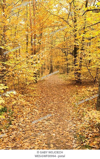 Germany, Rhineland-Palatinate, Wood, leaves, autumn colours