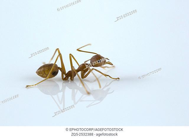 Ant, Bangalore , India