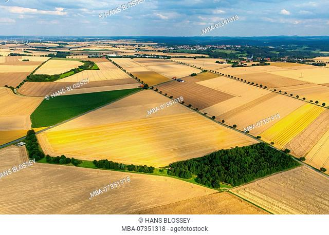 Cornfields near Altenrüthen, Rüthen, district Soest, Sauerland, North Rhine-Westphalia, Germany