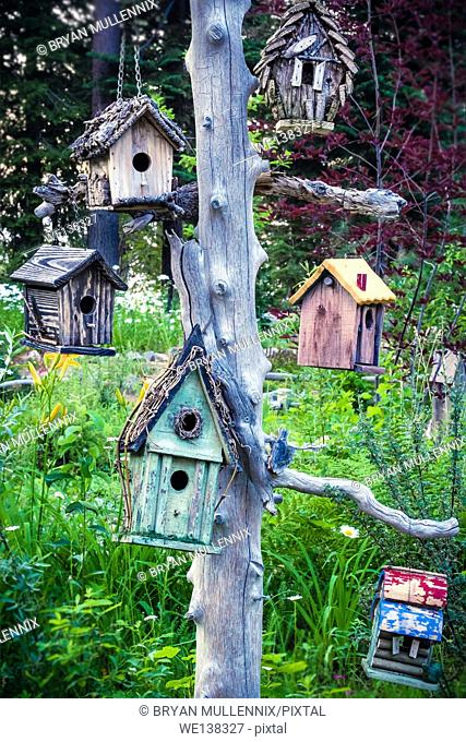 An assortment of different birdhouses hang from a tree in a garden