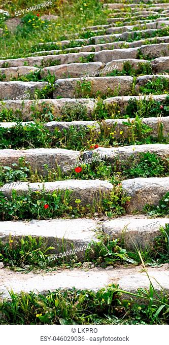 in umm quais jordan the antique abandoned stairwais with flower and grass
