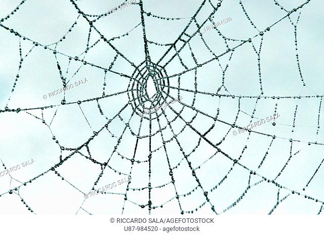 Spiderweb Covered with Melting White Frost
