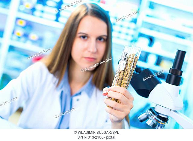 Female laboratory technician holding test tubes with legumes