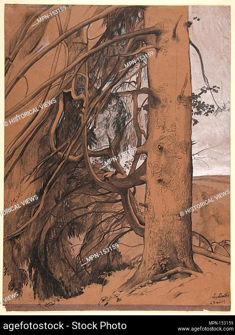 A Fir Tree in the Forest of the Landes, Aquitane. Artist: René-Ernest Huet (French, 1876-1914); Date: 1909; Medium: Black chalk, graphite, pen and ink