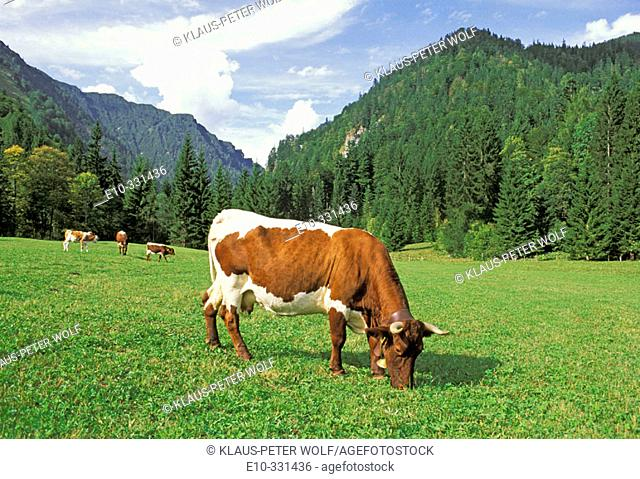Caws grazing