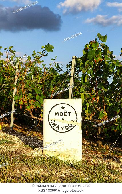 Moet and Chandon Champagne producer stone and vines near Epernay, Champagne, France