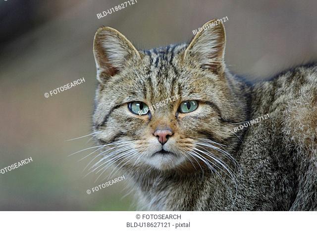 eyes, cat, eye, detail, close-up, felis, animal
