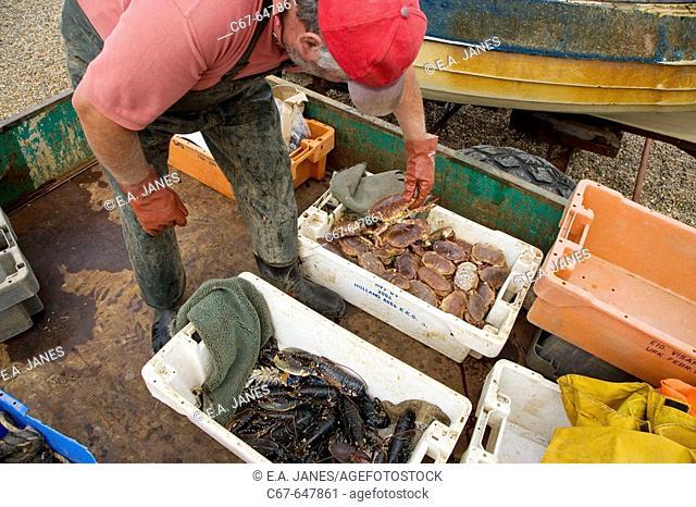 Fishing Boat landing catch at Weybourne Norfolk. UK