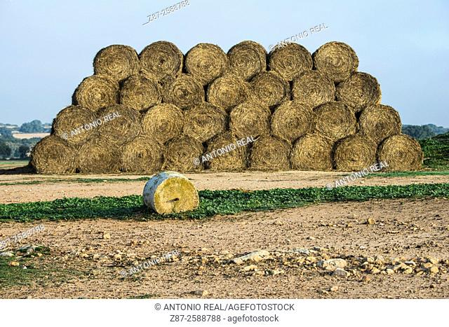 Hay bales, paraje de Botas, Almansa, Albacete, Castile-La Mancha, Spain