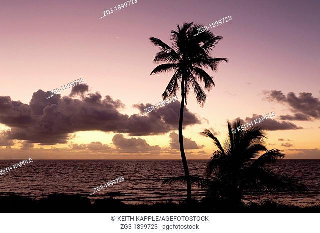 Dawn sunlight with palm trees at Bahia Honda Key, Florida, USA