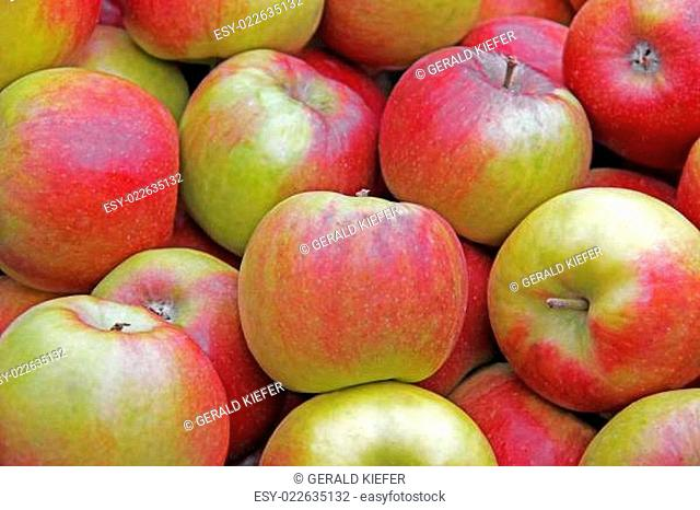 Apfelsorte Jonagold