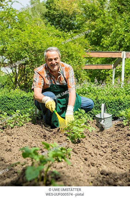 Germany, Hesse, Lampertheim, senior gardener at work