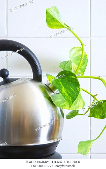 Fresh green shoot growing out of an electric kettle