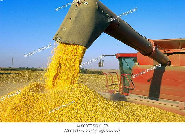 Agriculture - A combine augers a full load of freshly harvested grain corn into a grain cart in the field for transport to a grain elevator / IA