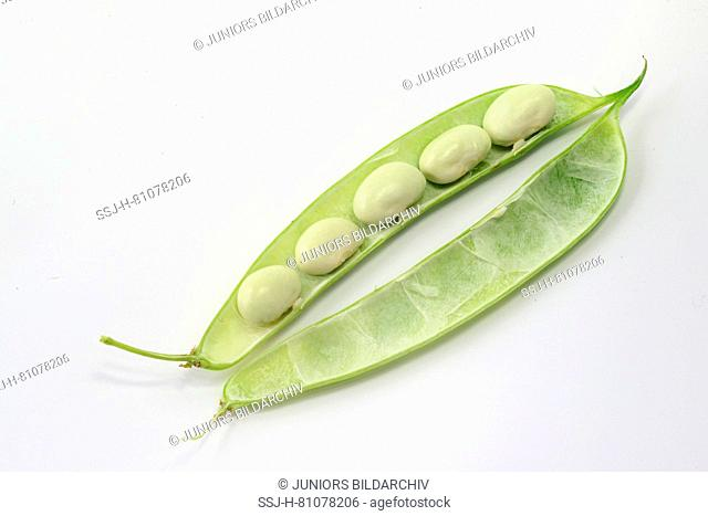 Green Bean (Phaseolus vulgaris). Opened fresh bean pod with white seeds. Studio picture against a white background