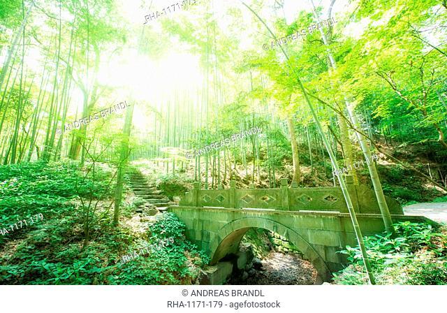 Old stone bridge and lush foliage in the Yun Qi Bamboo Forest, Zhejiang, China, Asia