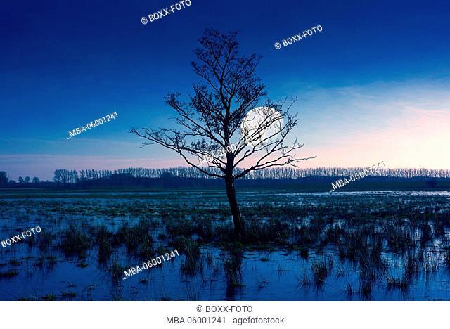 Scenery, tree, moon, in the evening, Germany, Mecklenburg-West Pomerania, island of the island of Rügen, Trent