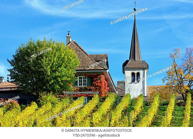 Europe, Switzerland, Canton Vaud, La Côte, Morges district, Fechy, vineyards in early autumn