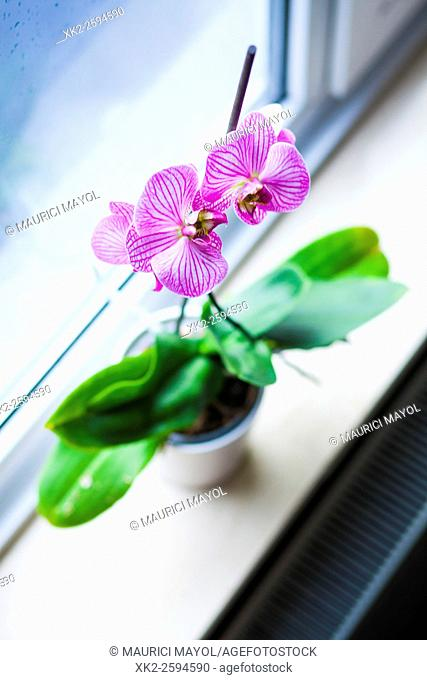 Orchid pov