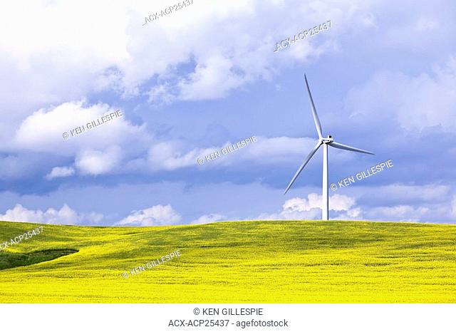 Wind Energy Turbine and Canola Field, on a stormy day. St. Leon, Manitoba, Canada