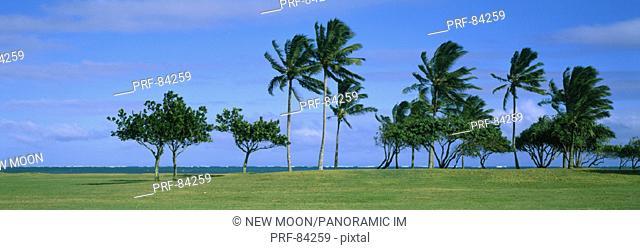 Palm Trees Oahu HI