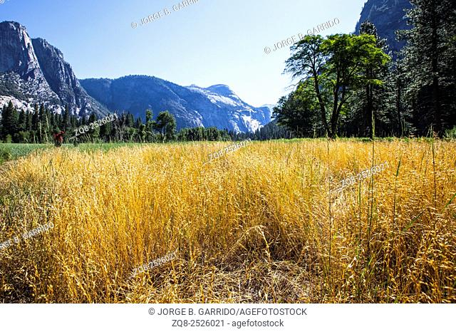 colorful valley in Yosemite National Park