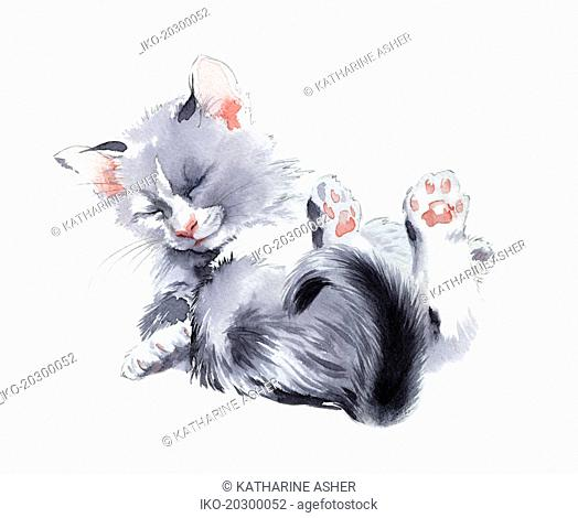 Cute fluffy kitten
