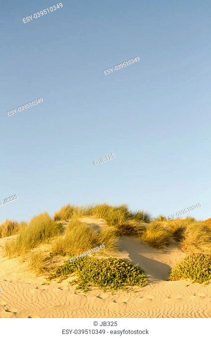 A view of the Oceano Dunes in Pismo Beach, California