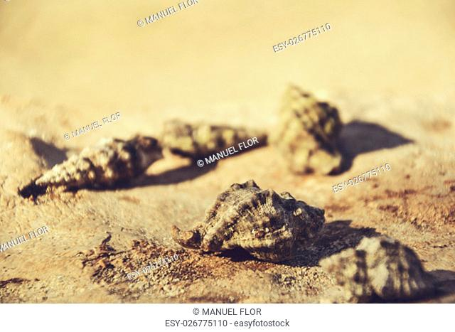 Beautiful seashells on the stone floor. Background with different seashells. Shallow depth of field