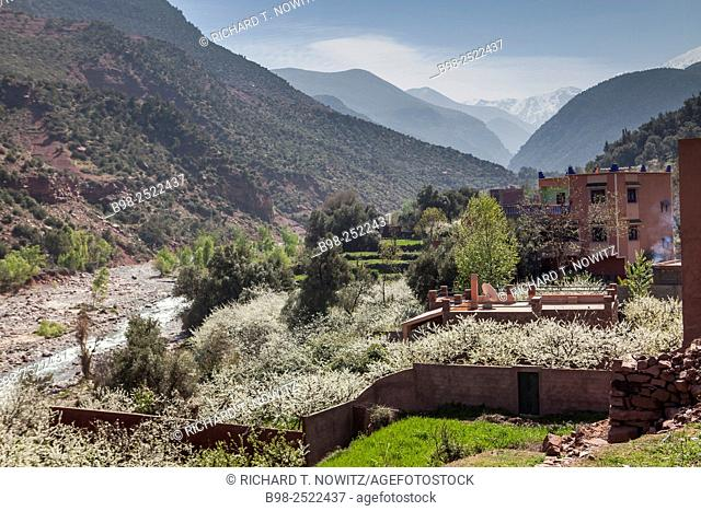 Almond trees in bloom in Ourika Valley, Atlas Mountains, Morocco