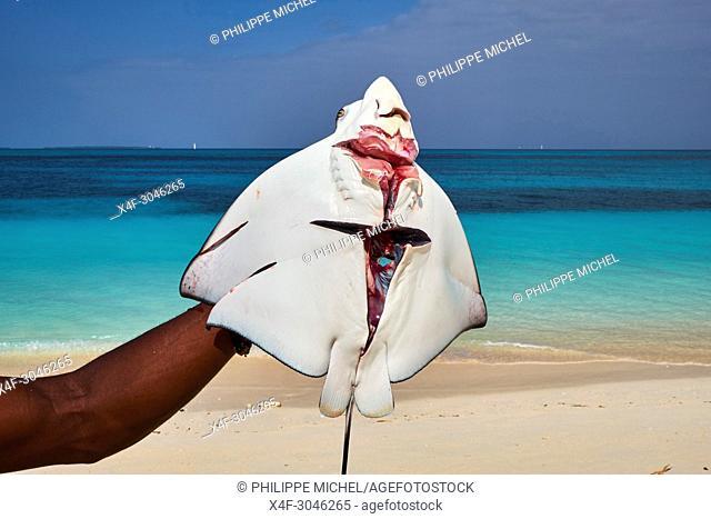 Tanzania, Zanzibar island, Unguja, Nungwi beach, fisher, ray