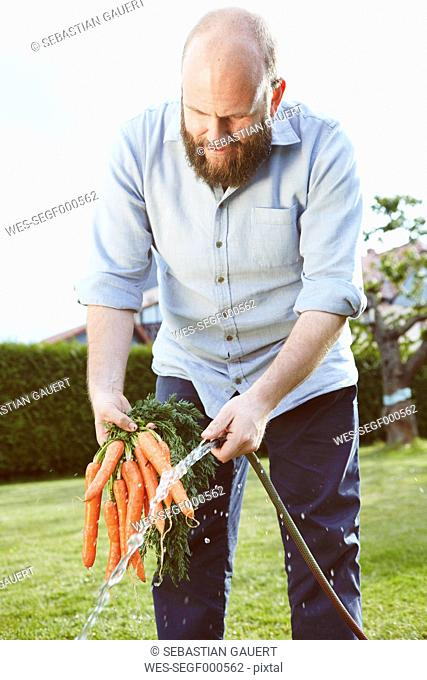 Young man working in garden, bunch of carrots, cleaning with water