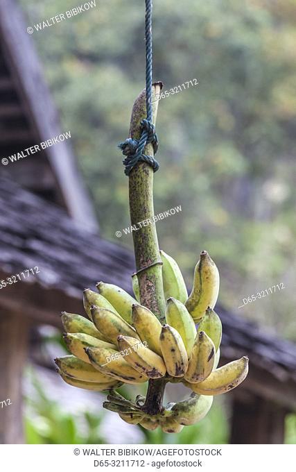 Laos, Sainyabuli, hanging bananas