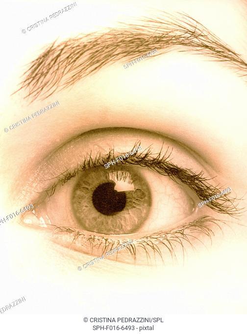 Open human eye, close up