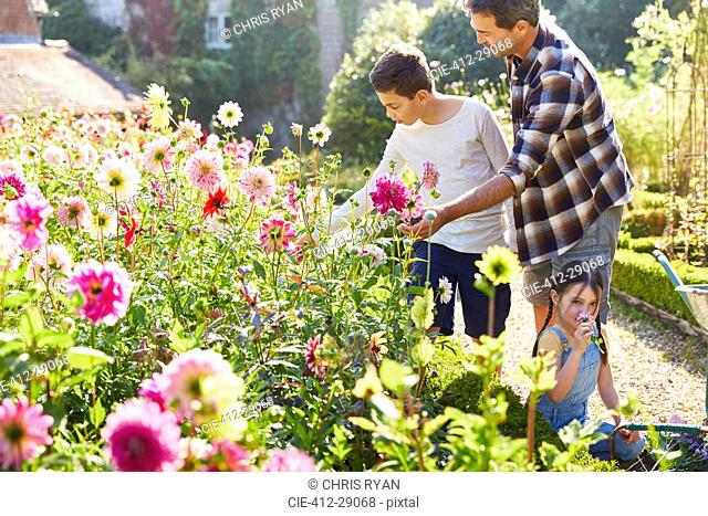 Father and son picking flowers in sunny garden