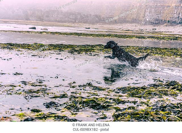 Dog splashing in seaside