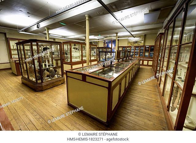 France, Seine Maritime, Rouen, Museum of Natural History, invertebrate room