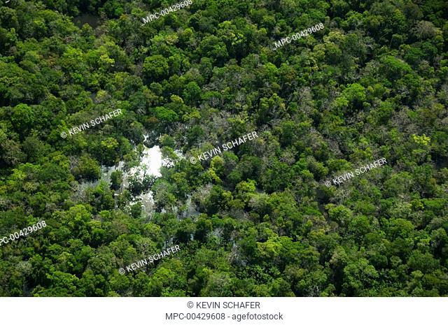 Flooded forest, habitat for the Amazon River dolphin, Rio Negro, Amazonia, Brazil