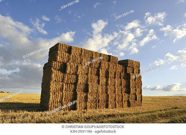 bales of straw, Eure-et-Loir department, Centre-Val de Loire region, France, Europe