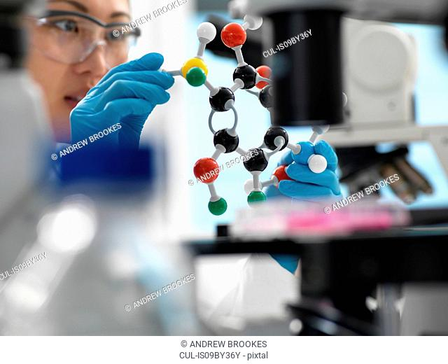Scientist designing drug formula using ball and stick molecular model in laboratory