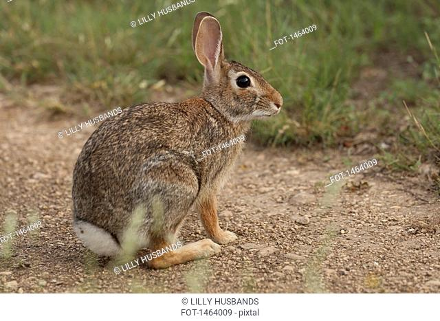 Side view of rabbit sitting on field