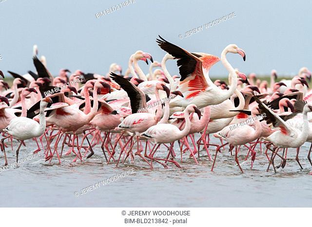 Flock of flamingoes walking on beach
