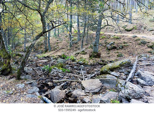 Sestil stream in the Sierra de Guadarrama  Canencia  Madrid  Spain