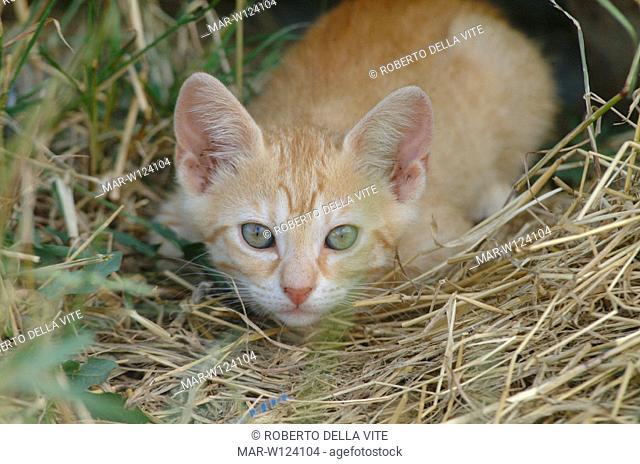 mongrel kitten