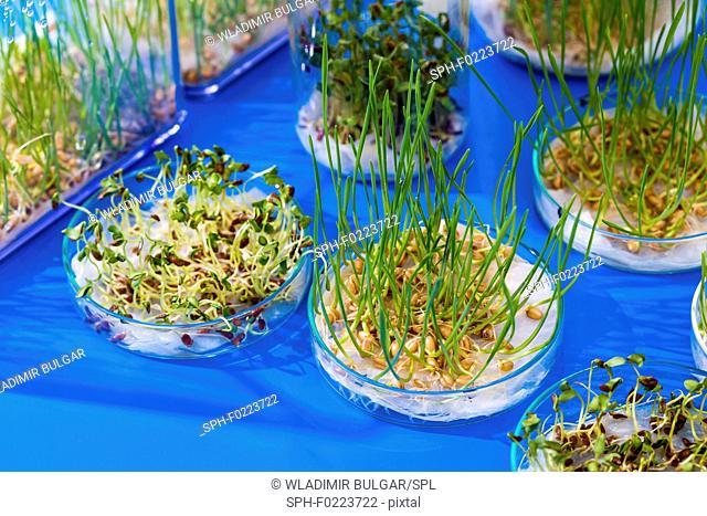 Plant research, conceptual image
