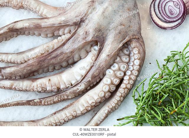 Octopus with herbs on bed of rock salt