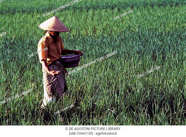 Java man dress Stock Photos and Images   age fotostock