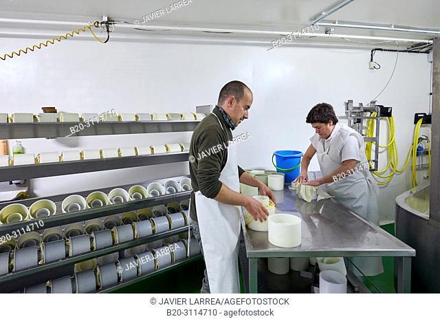 Preparation of sheep's cheese, Cheese denomination of origin Idiazabal, Caserio Mausitxa, Elgoibar, Gipuzkoa, Basque Country, Spain, Europe